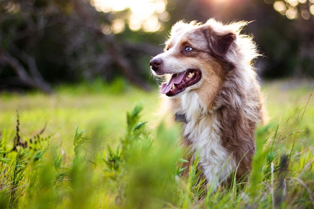 Stray Pets What To Do Happy Pets Mobile Vet Tampa Fl